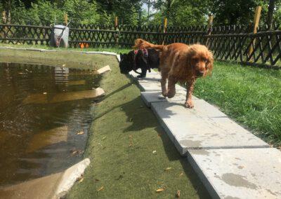 Hundepension Hundephysio Wilsdruff Teich