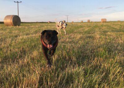 Hundepension Hundephysio Wilsdruff Strohballen