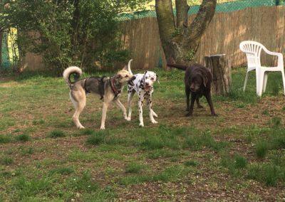Hundepension Hundephysio Wilsdruff Mischling