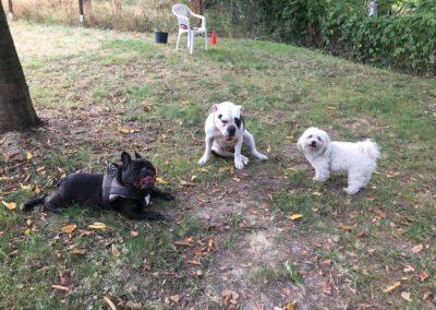 Hundepension Hundephysio Wilsdruff Bullibande