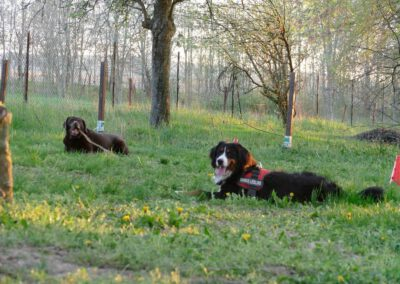 Hundepension Hundephysio Wilsdruff Wiesenpause