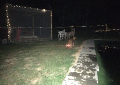 Hundepension Hundephysio Wilsdruff Sommer bei Nacht