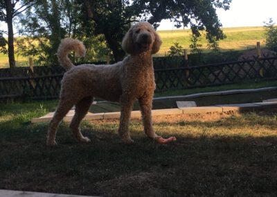 Hundepension Hundephysio Wilsdruff Stolze Lea