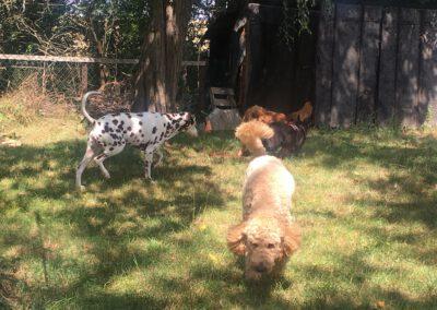 Hundepension Hundephysio Wilsdruff Gruppe