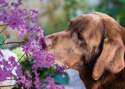 Aromatherapie Hundepension Hundephysio Tierheilpraxis Wilsdruff