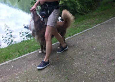 Begegnungstraining Fuß laufen Hundepension Hundephysio Wilsdruff