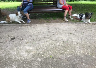 Begegnungstraining Hunde auf der Bank Hundepension Hundephysio Wilsdruff