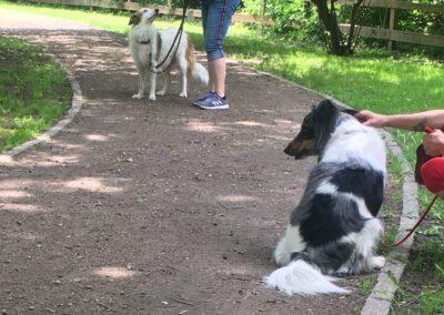 Begegnungstraining Hütehunde Hundepension Hundephysio Wilsdruff
