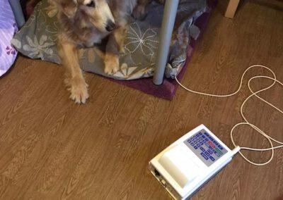 Bioresonanzbehandlung Dino Goldie Mobile Hundephysio Tierheilpraxis Wilsdruff