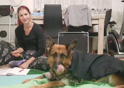 Bioresonanztherapie Schäferhund Mobile Hundephysio Tierheilpraxis Wilsdruff