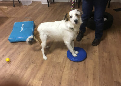 Aussie Balancekissen Degility Hundetraining Hundepension Hundephysio Tierheilpraxis Wilsdruff