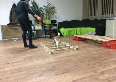 Terrier Cavaletti Degility Hundetraining Hundepension Hundephysio Tierheilpraxis Wilsdruff