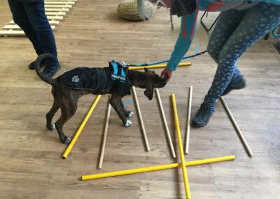 Welpe Cavaletti Degility Hundetraining Hundepension Hundephysio Tierheilpraxis Wilsdruff