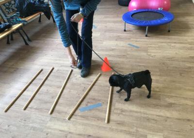 Mops Cavaletti Degility Hundetraining Hundepension Hundephysio Tierheilpraxis Wilsdruff