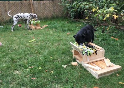 Denkspiele für Hunde Lucky&Happy Hundepension Hundephysio Tierheilpraxis Wilsdruff
