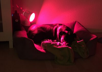 Rotlichtlampe Wärmetherapie Hundephysio Tierheilpraxis Hundephysiotherapie Dresden Wilsdruff
