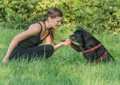 Happy&Ich Pfotegeben Hundepension Hundephysio Tierheilpraxis Wilsdruff