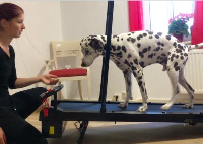 Laufband Muskelaufbau Lucky und Ich Hundephysio Tierheilpraxis Wilsdruff