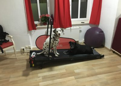 Laufband Lucky&Happy Hundephysio Tierheilpraxis Wilsdruff