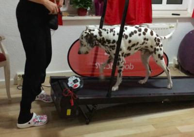 Laufband Lucky läuft Hundephysio Tierheilpraxis Wilsdruff