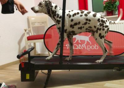 Laufband Gangschulung Lucky Hundephysio Tierheilpraxis Wilsdruff