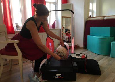 Laufband Muskelaufbau Maggi&ich 2 Hundephysio Tierheilpraxis Wilsdruff