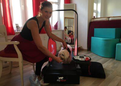 Laufband Muskelaufbau Hundephysio Tierheilpraxis Hundephysiotherapie Dresden Wilsdruff