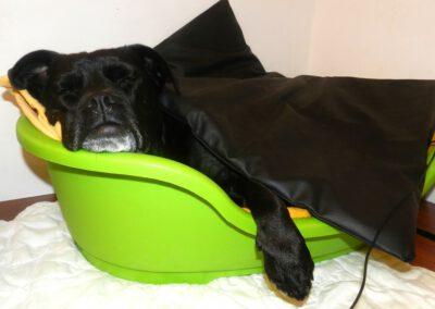 Magnetfeldtherapie Mischling Hundephysio Tierheilpraxis Wilsdruff