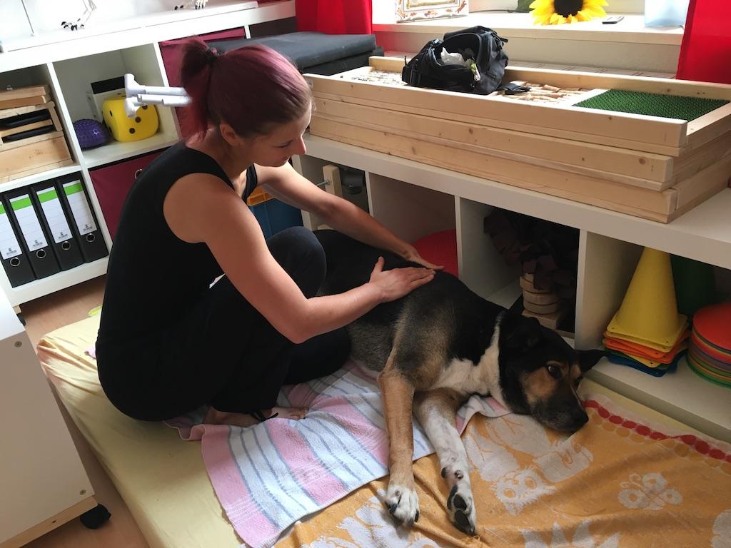 Massage Physiotherapie Hund Arko 1
