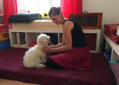 Massage in der Hundephysio Praxis 3 Tierheilpraxis Wilsdruff