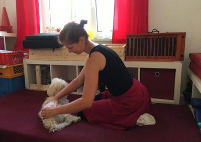 Massage in der Hundephysio Praxis 2 Tierheilpraxis Wilsdruff