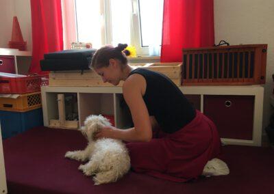 Massiere deinen Hund Hundephysiotherapie Hundephysio Wilsdruff Zauberhunde
