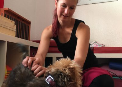 Massage Hundephysio Hundephysiotherapie Tierheilpraxis Wilsdruff Dresden Zauberhunde
