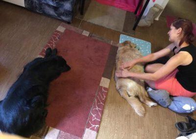 Massage bei Maike Kunze 3 Mobile Hundephysio Tierheilpraxis Wilsdruff