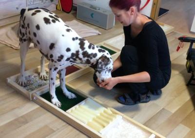 Ganzheitliche Praxis für Hunde Zauberhunde in Wilsdruff nahe Dresden Hundephysio