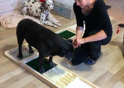 Propriozeption Muskelaufbau 4 Hundephysio Tierheilpraxis Wilsdruff