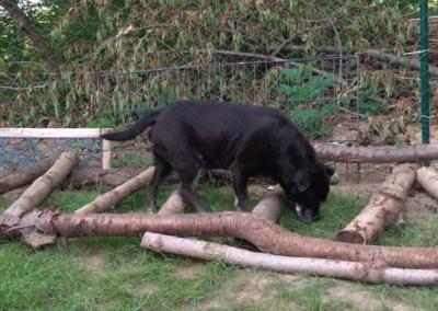 Happy Stangen steigen Cavaletti Hundepension Hundephysio Tierheilpraxis Wilsdruff