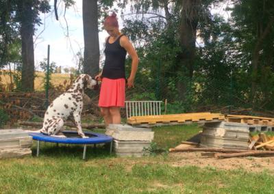 Lucky Trampolin 2 Hundepension Hundephysio Tierheilpraxis Wilsdruff