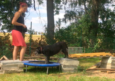 Happy Trampolin Hundepension Hundephysio Tierheilpraxis Wilsdruff