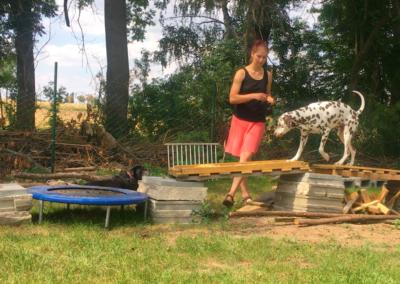 Lucky Degility Garten Hundepension Hundephysio Tierheilpraxis Wilsdruff