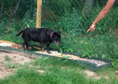 Happy Propriozeptionsstrecke Hundephysio Tierheilpraxis Wilsdruff