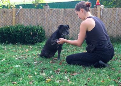 Hund Pfote geben sitzen Hundephysio Tierheilpraxis Wilsdruff