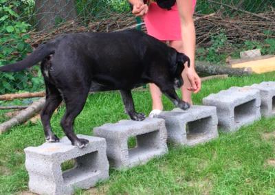 Happy Steine steigen Balance Hundepension Hundephysio Tierheilpraxis Wilsdruff