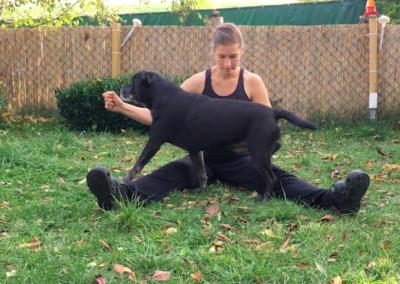 Happy Stangensteigen über Beine Hundephysio Tierheilpraxis Wilsdruff