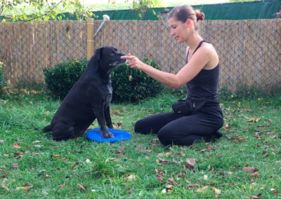 Happy blaues Wackelkissen Hundepension Hundephysio Tierheilpraxis Wilsdruff