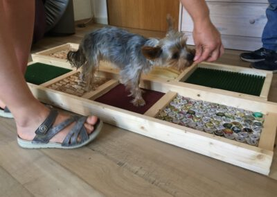 Propriozeption Muskelaufbau 1 Hundephysio Tierheilpraxis Wilsdruff