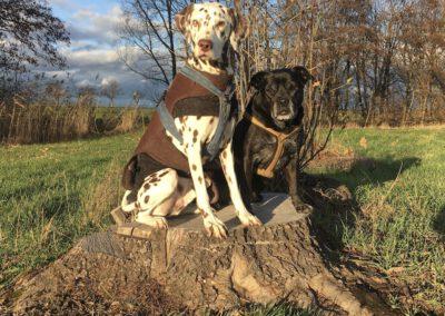 Lucky&Happy Baumstumpf Hundepension Hundephysio Tierheilpraxis Wilsdruff