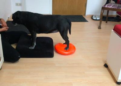 Hundephysio Wilsdruff Zauberhunde Wackelkissen Tierheilpraxis Degility 2