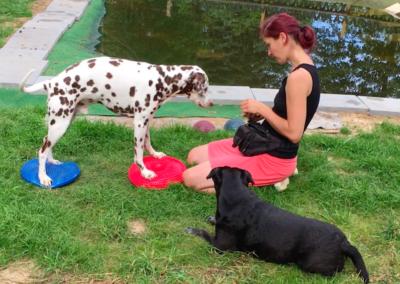 Lucky Wackelkissen Balance Hundepension Hundephysio Tierheilpraxis Wilsdruff