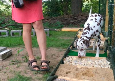 Lucky Propriozeptionsstrecke Hundepension Hundephysio Tierheilpraxis Wilsdruff